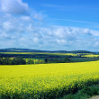 Stock Photo: Rape fields scenery