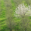 Tree in the spring - Stock Photo