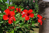 Hibiscus and palm — Stock Photo