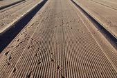 Beach and bird tracks — Stock Photo