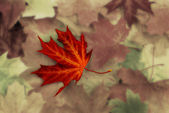 Achtergrond herfst — Stockfoto