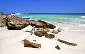 Beach in the Seychelles — Stock Photo