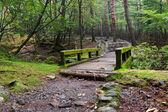 Kirishima dağlarda yağmur — Stok fotoğraf