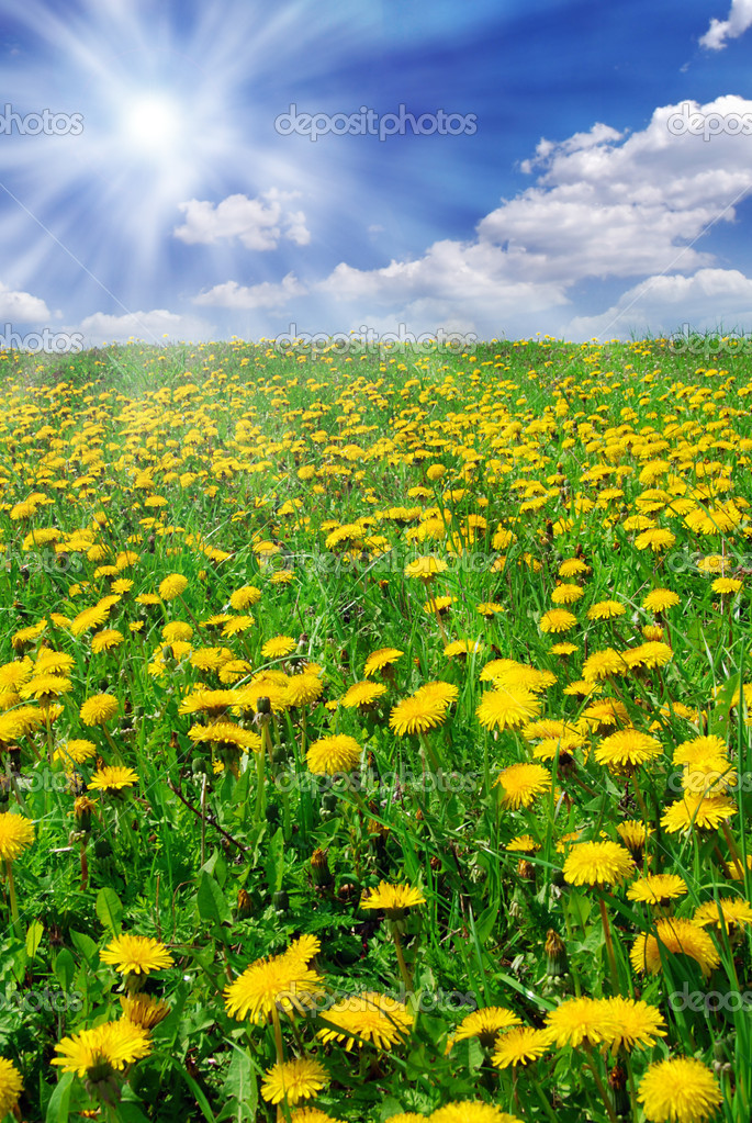 Beautiful summer field full of yellow blooming dandelions and shining sun — Stock Photo #6810062