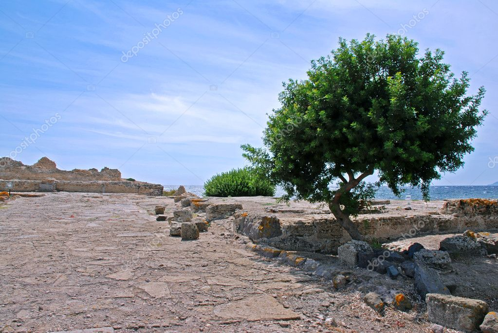 Ancient ruins of Pula in Italy with a olive tree and sea — Stock Photo #6810082