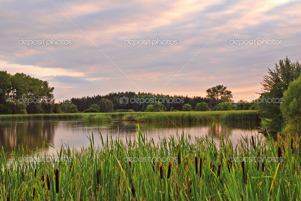 Pond with reed and bulrush by evening sunset  Stock Photo #6810084