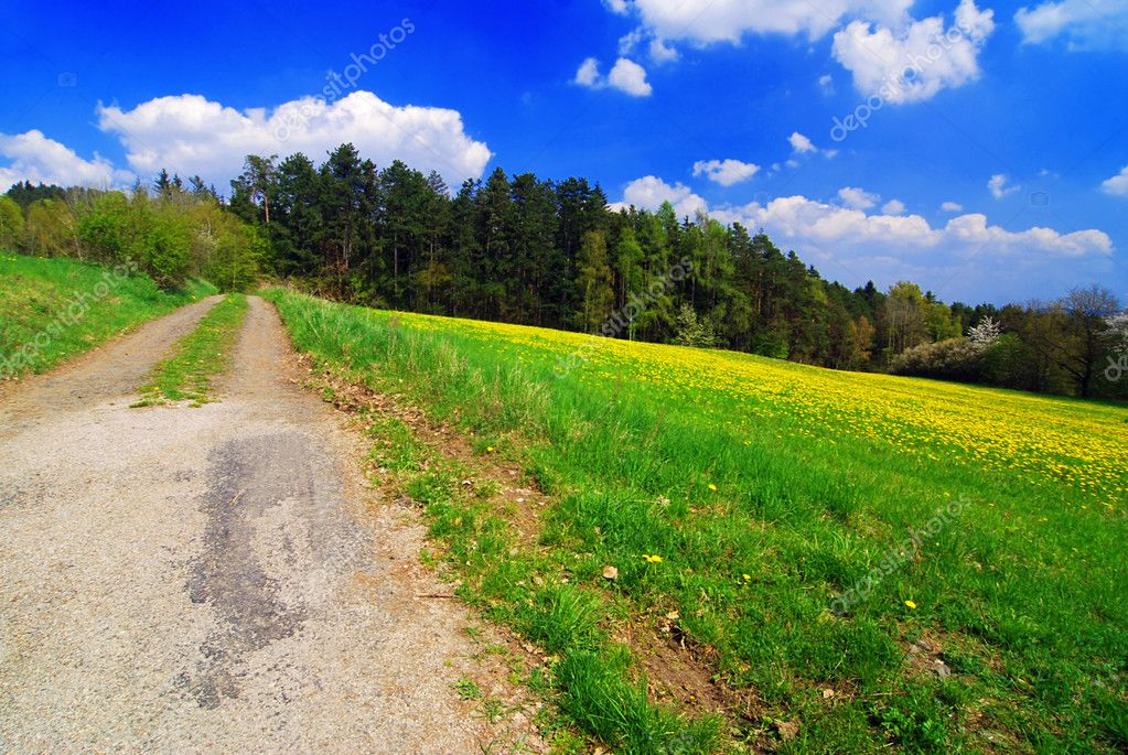 Beautiful spring landscape with blooming yellow dandelions — Stock Photo #6810110