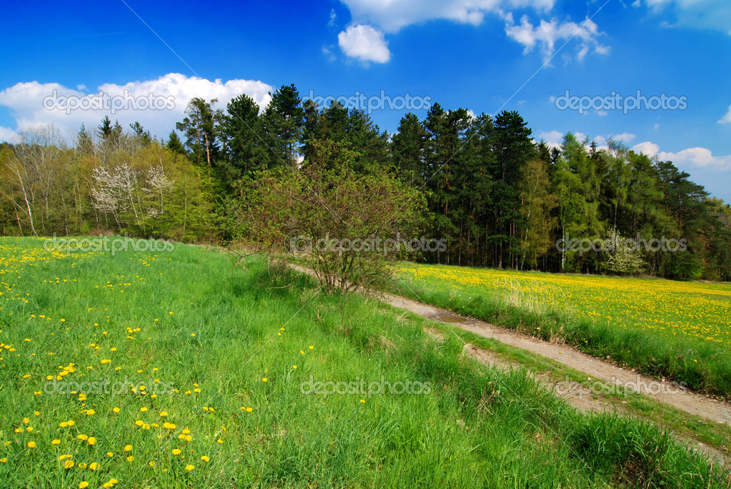Beautiful spring landscape with blooming yellow dandelions — Stock Photo #6810113