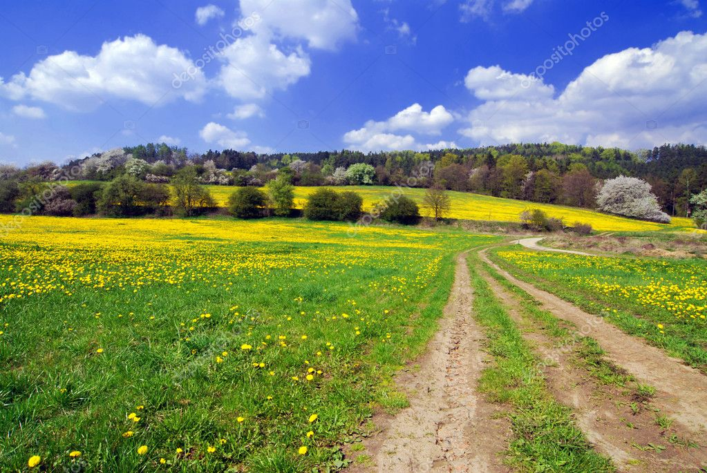 Beautiful spring landscape with blooming yellow dandelions  Stock Photo #6810118