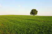 Tree and grass — Stock Photo