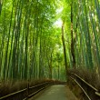 Stock Photo: Bamboo grove