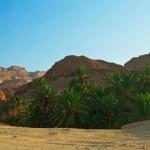 Mountain oasis Chebika — Stock Photo