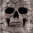 Stock Photo: Rotting skull