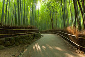 Bamboo grove — Stockfoto