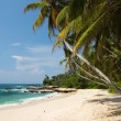 Tropical paradise — Stock Photo #7950391