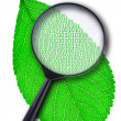 Stock Photo: Leaf of plant under magnifying glass