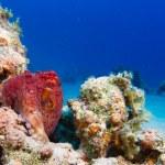 Постер, плакат: Reef Octopus