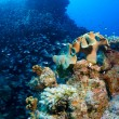 Stock Photo: Schooling fish and corals