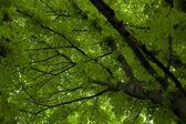 Sunlight in trees of green summer forest — Stockfoto