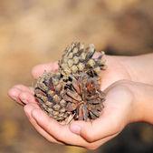 Cones in the children's hands — ストック写真
