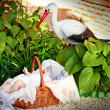 Newborn in the basket, stork — Stock Photo #7033493