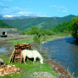Foto Stock: Easter Carpathians