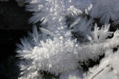 Frostwork — Stock Photo