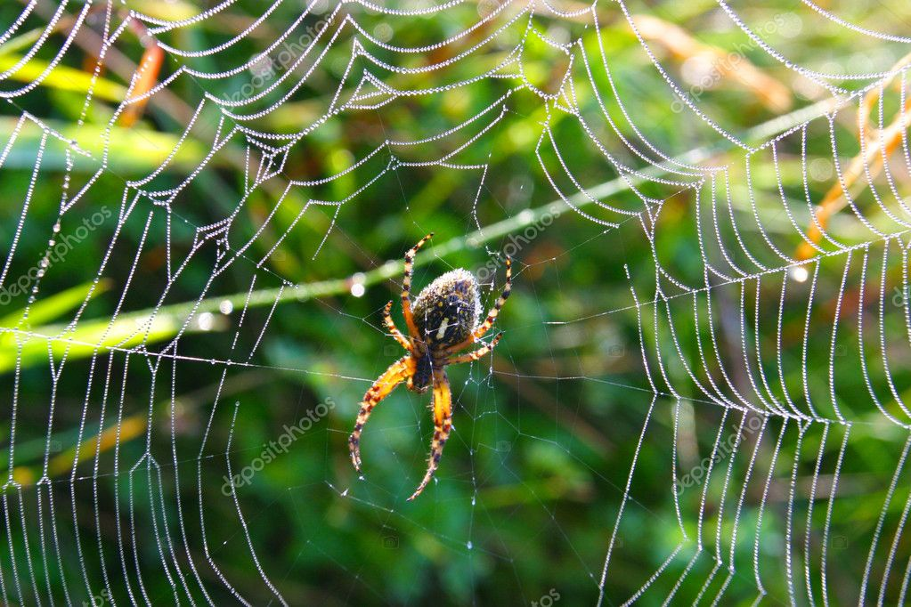 Spider in its web — Stock Photo #7004440
