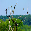 Birds on the branches — Stock Photo