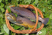 Trouts — Stock Photo