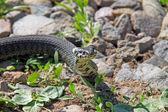 Mały wąż — Zdjęcie stockowe