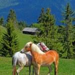 Horses — Stock Photo #7200880