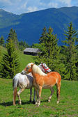 Horses — Foto Stock