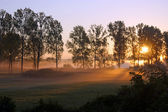 Sunrise on the meadow — Stock Photo
