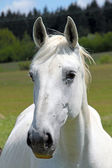 Portrait of a horse — Stockfoto