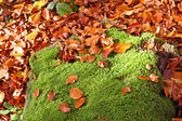 Autumn leaves with moss — Stock Photo