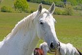 Koně na zbytekst 保罗,意大利罗马 — Stock fotografie