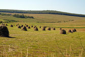 Haystacks on the meadow — Stock Photo
