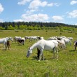Horses on the pasture — Stock Photo #7240159