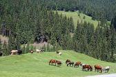 Hästarna på betet — Stockfoto