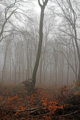 A misty forest — Stock Photo