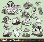 Vintage Fruits Collection — Stock Vector
