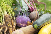 Collection of harvested vegetables. — Stock Photo