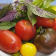 Plate of mixed tomatoes with Purple and Green basil leaves. — Stock Photo