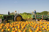 Pumpkin Patch with Tractor and Trailer — Stock Photo