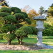 Stone Lantern and Pruned Bonsai Tree at Japanese Garden — Foto de stock #7326374
