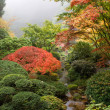 Creek at Japanese Garden in the Fall — Stock fotografie