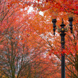 图库照片: Fall Colors at Portland Oregon Downtown City Park