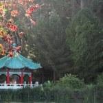 Chinese Pavilion at San Francisco Golden Gate Park — Stock Photo #7916026