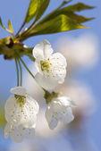 Una flor — Foto de Stock